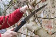 Tree Pruning in Birmingham, AL