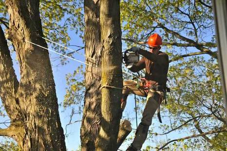 Tree Trimming by Mentor Tree Service