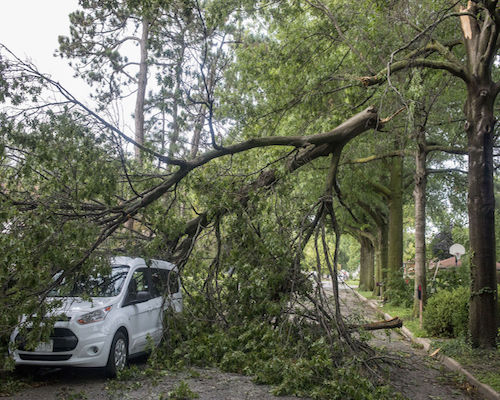 Storm Tree Damage in Hoover AL